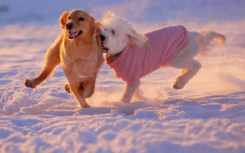 1291145006_dog-winter-1.jpg