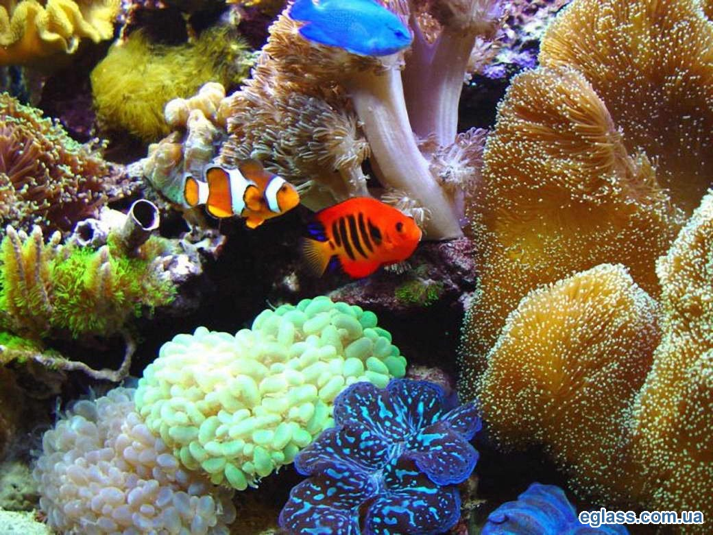 1329756637_sea-aquarium-1.jpg