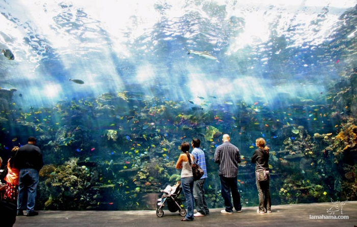 168_5-largest-aquarium-in-the-world.jpg