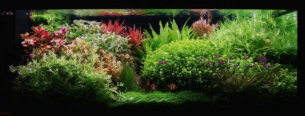 aquarium-plants-list-i17.jpg