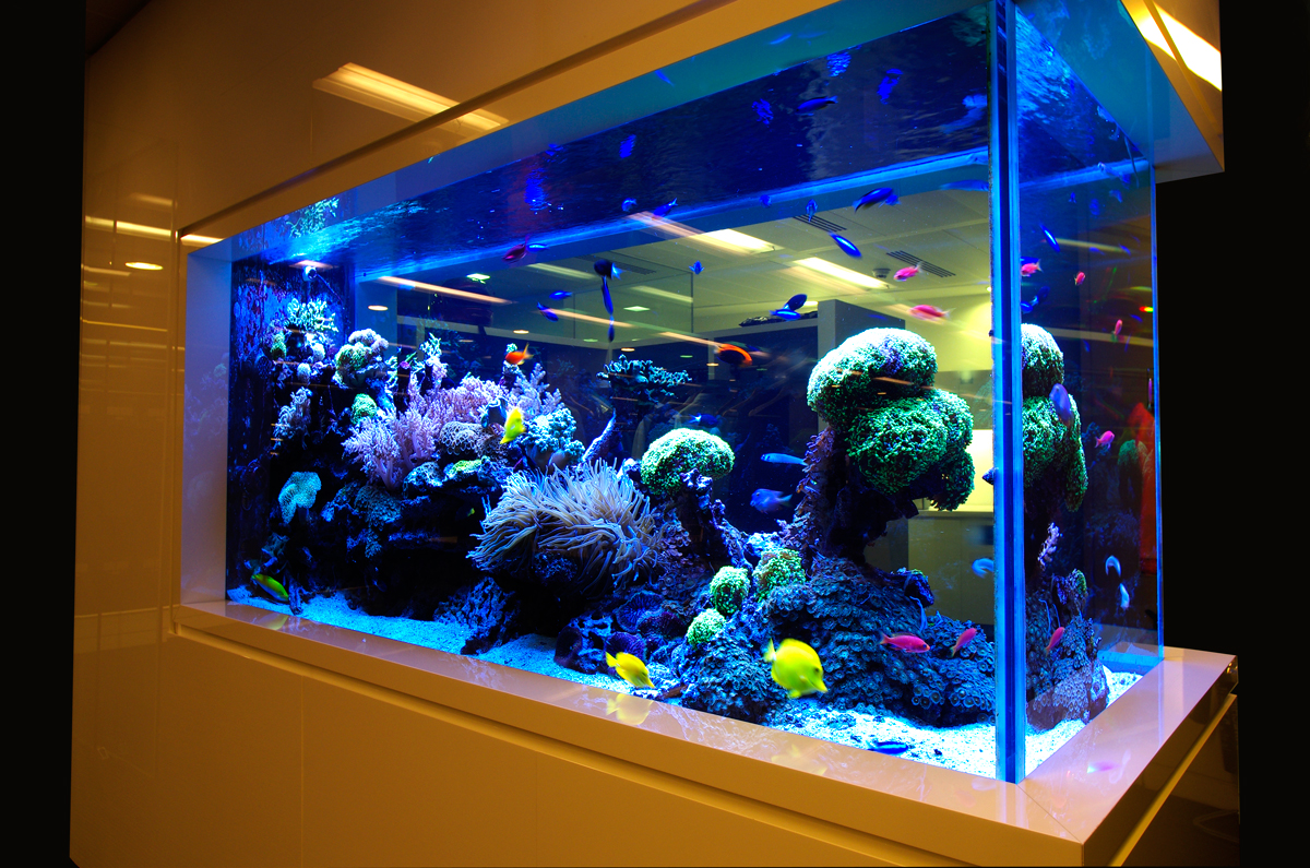 glass-aquariums.jpg