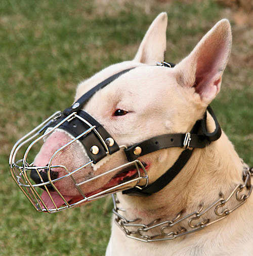 M4-D-12-Basket-Dog-Muzzle.jpg